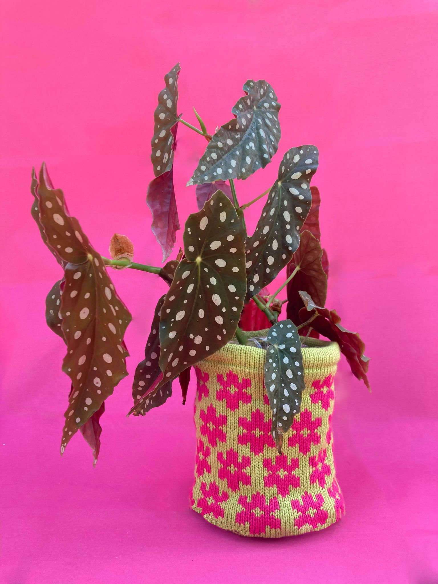 Medium Lilac Blossom Pot Cover - Lime and Hot Pink